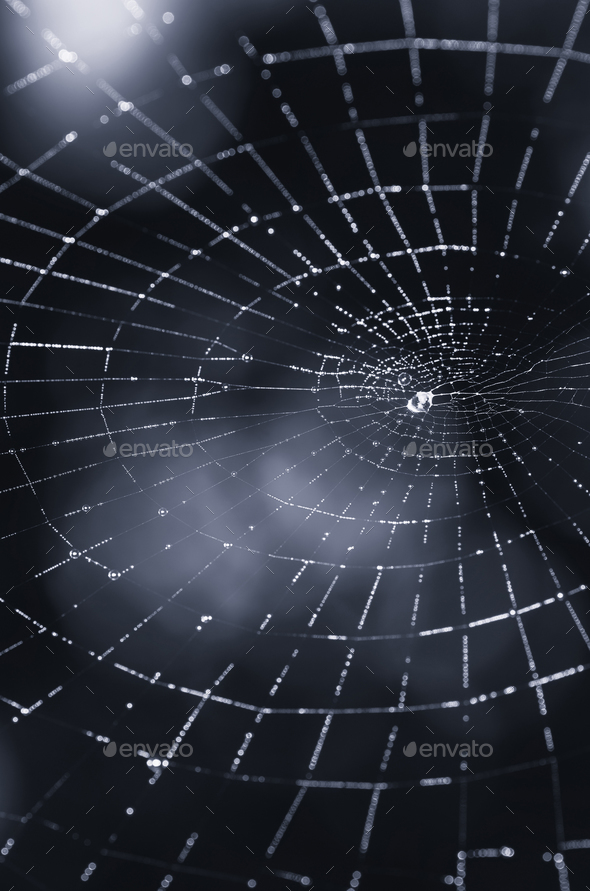 abstract dark scary spider web background