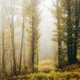 vivid autumn foliage in misty forest - PhotoDune Item for Sale
