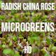Microgreens Radish China Rose 2 - VideoHive Item for Sale