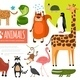 Flat Zoo Animals Composition - GraphicRiver Item for Sale