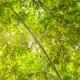 Bamboo forest with sunlight_-5 - PhotoDune Item for Sale