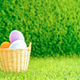 Easter eggs in the basket on green grass-9 - PhotoDune Item for Sale