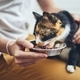 Domestic life with cat - PhotoDune Item for Sale