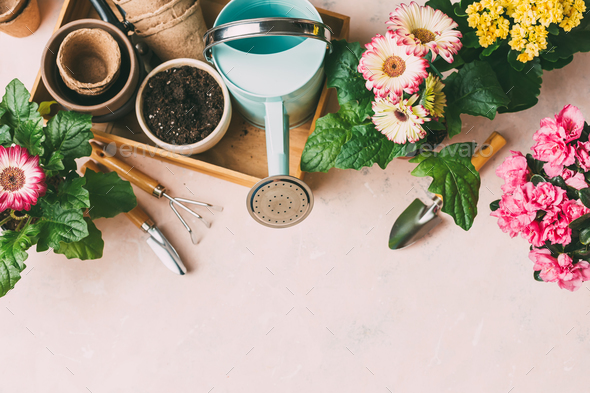Gardening tools and colorful flowers - Stock Photo - Images
