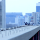 Rooftop Pigeons - VideoHive Item for Sale