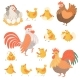 Chicken and Rooster - GraphicRiver Item for Sale