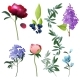 Flowers Collection Decorative Botanical Floral - GraphicRiver Item for Sale