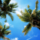 Palm tree with sunlight in summer - PhotoDune Item for Sale