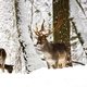Fallow deers in the wild  - PhotoDune Item for Sale
