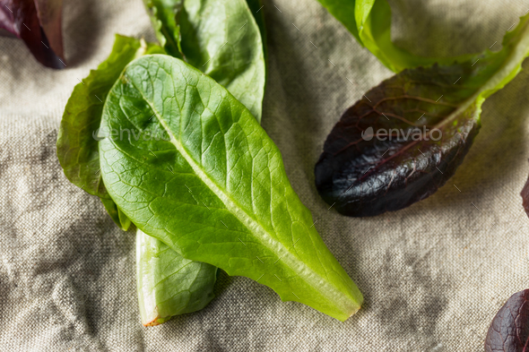 Raw Green Organic Baby Romaine Lettuce - Stock Photo - Images