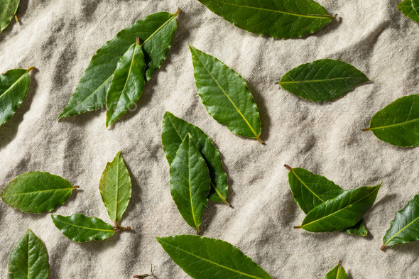 Raw Green Organic Bay Leaves - Stock Photo - Images