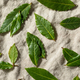 Raw Green Organic Bay Leaves - PhotoDune Item for Sale