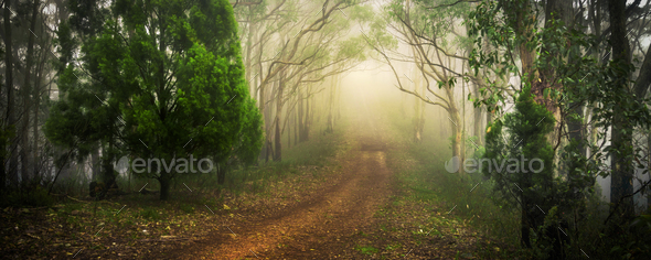 Garden Path - Stock Photo - Images