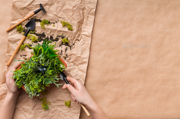 Woman planting flower in pot on craft paper - Stock Photo - Images