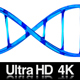 4K DNA Double Helix Strand Loop - VideoHive Item for Sale
