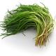 fresh agretti, italian vegetable isolated on white background - PhotoDune Item for Sale
