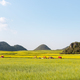 yunnan luoping spring landscape, China - PhotoDune Item for Sale