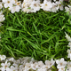 Green grass with blooming apple tree branch. - PhotoDune Item for Sale