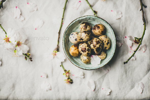 Easter flat-lay with quail eggs, almond tree branches with flowers - Stock Photo - Images