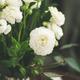 Spring white buttercup flowers in enamel jug, curtain behind - PhotoDune Item for Sale