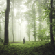 man in green forest with fog - PhotoDune Item for Sale