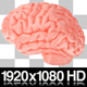 Human Brain with Alpha Channel - VideoHive Item for Sale