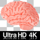 4K Human Brain with Alpha Channel - VideoHive Item for Sale
