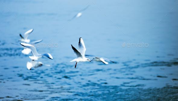 Beautiful seagulls flying - Stock Photo - Images