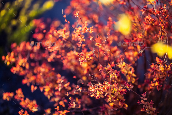 beautiful plants. nature, spring - Stock Photo - Images