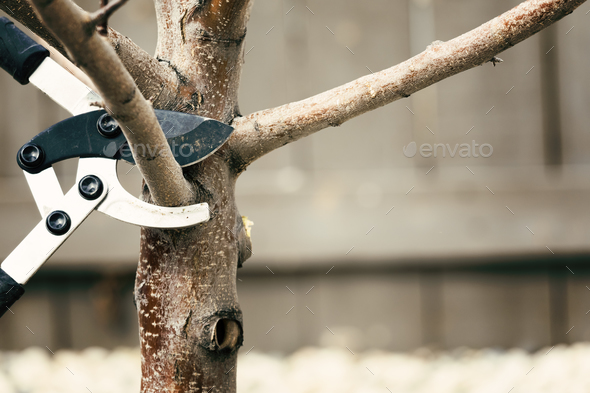 Pruning tree - Stock Photo - Images