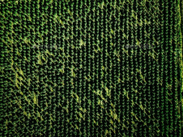 Aerial view of farmland and rows of crops. - Stock Photo - Images