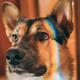 Reflection Of A Multi-colored Rainbow On The Face Of A Dog. Mixe - PhotoDune Item for Sale