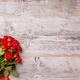 Fresh red garden roses - PhotoDune Item for Sale