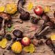 Forest raw mushrooms - PhotoDune Item for Sale