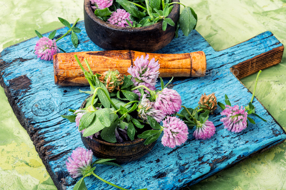 Clover in herbal medicine - Stock Photo - Images