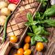 Harvest fresh vegetables and greens - PhotoDune Item for Sale