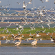 white pelicans and seagulls in flight - PhotoDune Item for Sale