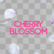 Cherry Blossom - VideoHive Item for Sale