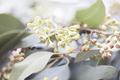 Eucalyptus Leaves and Seeds - PhotoDune Item for Sale