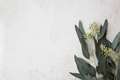 Eucalyptus On Marble - PhotoDune Item for Sale