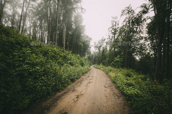 Road through misty green forest - Stock Photo - Images