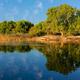 Trees and reflection - Zambezi river - PhotoDune Item for Sale