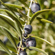 Olive fruit with green leaves background. Agriculture background. Jaen, Spain - PhotoDune Item for Sale