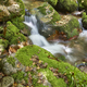 Green forest with stream in Muniellos biosphere reserve, Asturias. Spain - PhotoDune Item for Sale