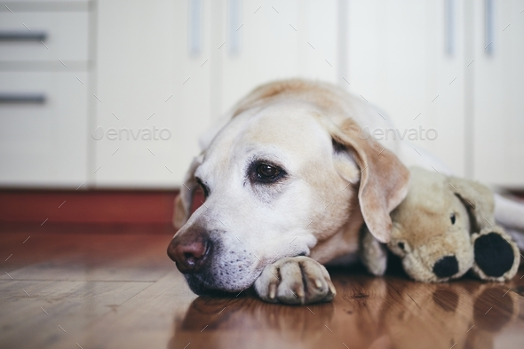 Old dog in home kitchen - Stock Photo - Images