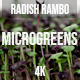 Microgreens Radish Rambo 4 - VideoHive Item for Sale