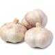 Garlic - PhotoDune Item for Sale