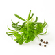 Fresh parsley and rosemary - PhotoDune Item for Sale