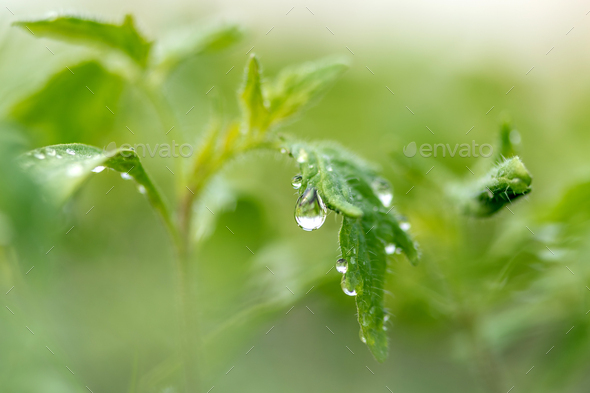 Water drop on a leaf macro shot - Stock Photo - Images