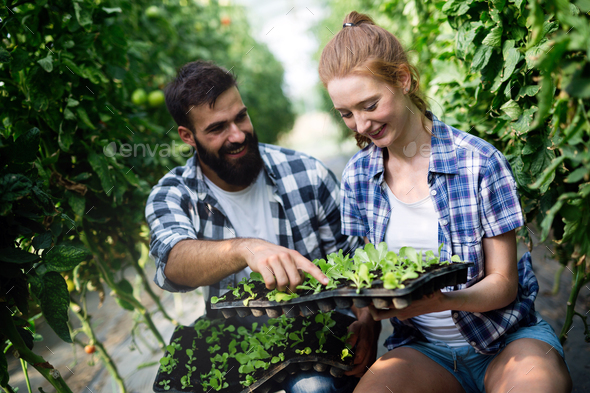 Two people working in a greenhouse - Stock Photo - Images